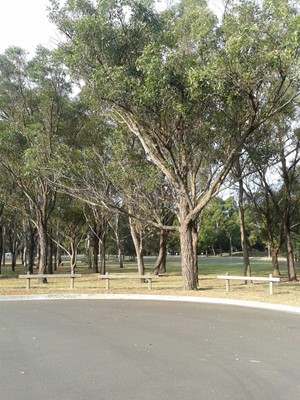 Find Parks In Bankstown NSW